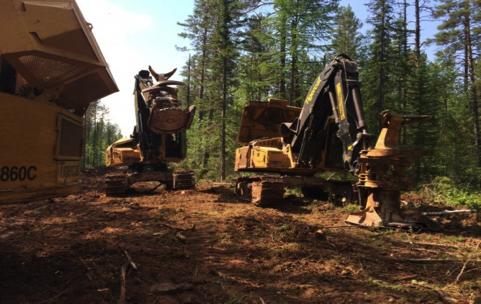 Канадская технология заготовки древесины